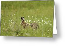Hare On The Run Greeting Card