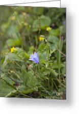 Harebell - Campanula Rotundifolia - Flower Greeting Card