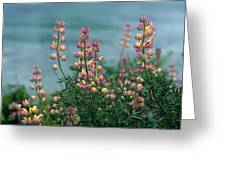 Harlequins In Harmony Greeting Card by Kathy Yates