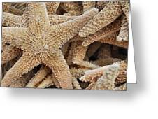 Harmonious Starfish Greeting Card