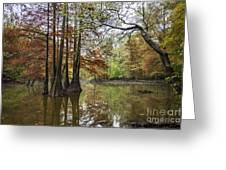 Harmony Of The Swamp Greeting Card