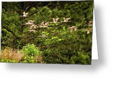 Harris Neck Ibis In Flight Greeting Card