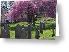 Harris Street Cemetery Cherry Blossom Tree Marblehead Ma 2 Greeting Card