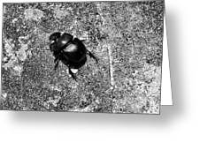 Harsh Life Black White Life Is Dung Beetle Card Greeting Card