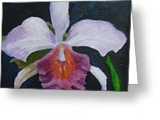 Hartford Orchid Greeting Card