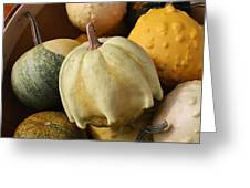 Harvest Of Gourds Greeting Card