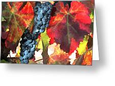 Harvest Time Grapes And Leaves Greeting Card by Elaine Plesser
