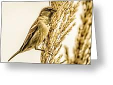 Harvest Time Iv Greeting Card