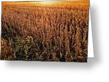 Harvest Twilight Greeting Card