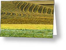 Harvested Fields Of The Palouse Greeting Card