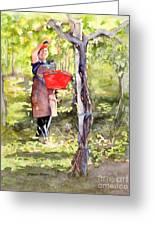 Harvesting Anna's Grapes Greeting Card