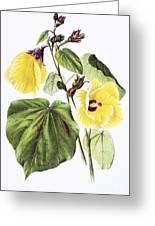 Hau Flower Art Greeting Card