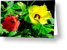 Hau Tree Blossoms Greeting Card