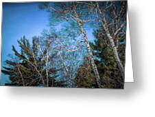 Haunted Trees Greeting Card