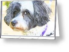 Havanese Dog Greeting Card