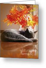Have A Restful Thanksgiving Greeting Card