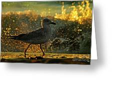 Have A Walk By Th Sea Greeting Card