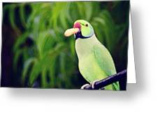 Have You Gone Nuts  Greeting Card