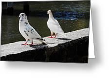 Hawaii Birds 9 Greeting Card