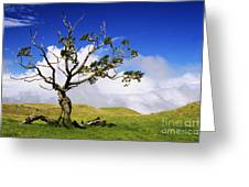 Hawaii Koa Tree Greeting Card