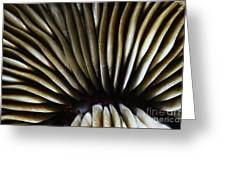 Hawaii Mushroom Coral Greeting Card