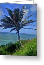 Hawaii Palm Greeting Card