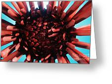 Hawaii Pencil Urchin Greeting Card