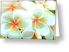 Hawaii Plumeria Frangipani Flowers #86 Greeting Card