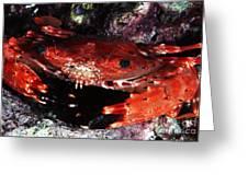 Hawaii Swimming Crab Greeting Card