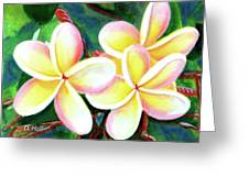 Hawaii Tropical Plumeria Flower #213 Greeting Card