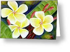 Hawaii Tropical Plumeria Flower #298, Greeting Card