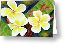 Hawaii Tropical Plumeria Flower #298, Greeting Card