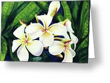 Hawaii Tropical Plumeria Flowers #160 Greeting Card