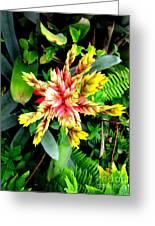 Hawaiian Beauty 3 Greeting Card