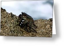 Hawaiian Crab Legs Greeting Card