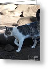 Hawaiian Feral Cat 2 Greeting Card