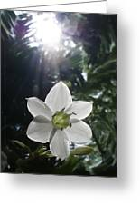 Hawaiian Flower Greeting Card
