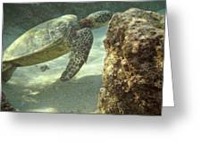 Hawaiian Green Sea Turtle Greeting Card