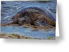 Hawaiian Green Sea Turtle Greeting Card