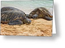 Hawaiian Green Sea Turtles 1 - Oahu Hawaii Greeting Card