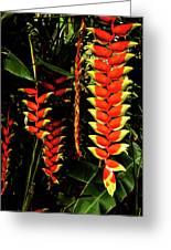 Hawaiian Heliconia Greeting Card