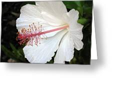 Hawaiian Hibiscus 2 Photograph Greeting Card