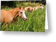 Hawaiian Horses In Sugar Cane Greeting Card