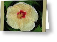 Hawaiian Hybiscus Greeting Card