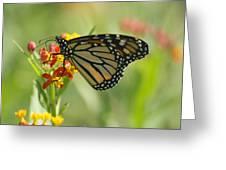 Hawaiian Monarch 1 Greeting Card