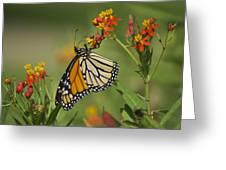 Hawaiian Monarch 2 Greeting Card