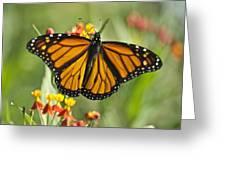 Hawaiian Monarch 3 Greeting Card