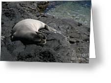 Hawaiian Monk Seal Ilio Holo I Ka Uana Greeting Card