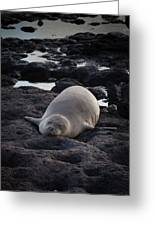 Hawaiian Monk Seal Greeting Card