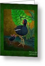 Hawaiian Moorhen Or Gallinule Greeting Card